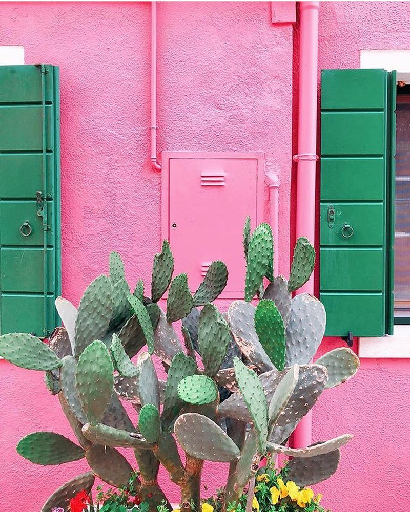 plants-on-pink